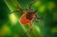 Wildlife Safety and Diseases